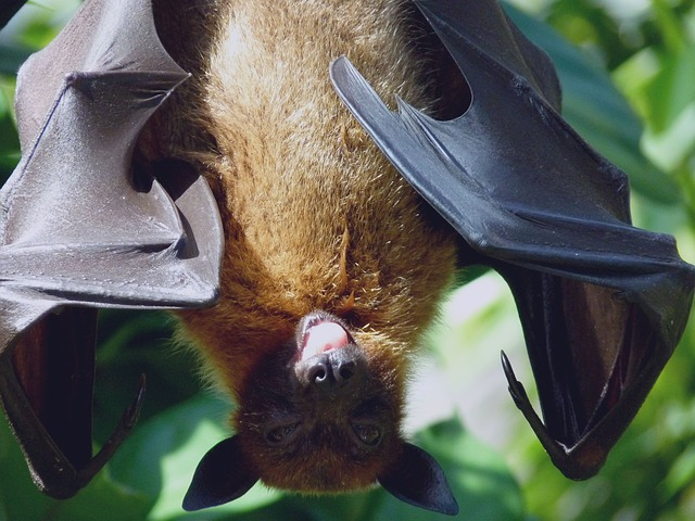 #Bat Appreciation Day