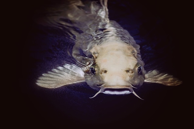 FREE STOCK PICTURE OF A CATFISH CELEBRATING NATIONAL CATFISH DAY
